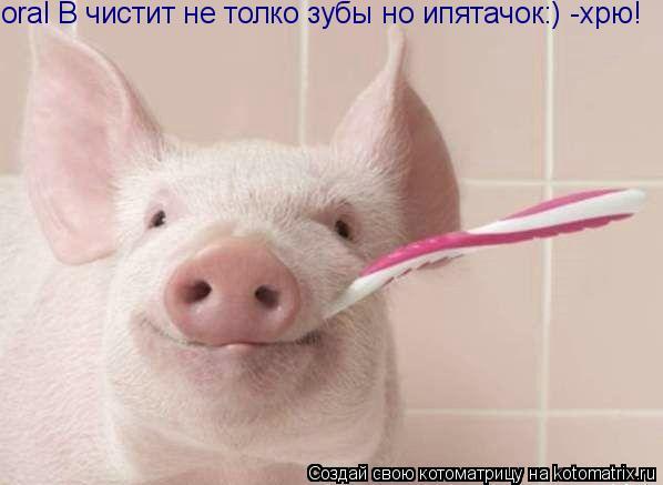 Котоматрица: oral B чистит не толко зубы но ипятачок:) -хрю!