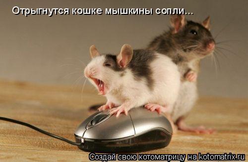 Котоматрица: Отрыгнутся кошке мышкины сопли...