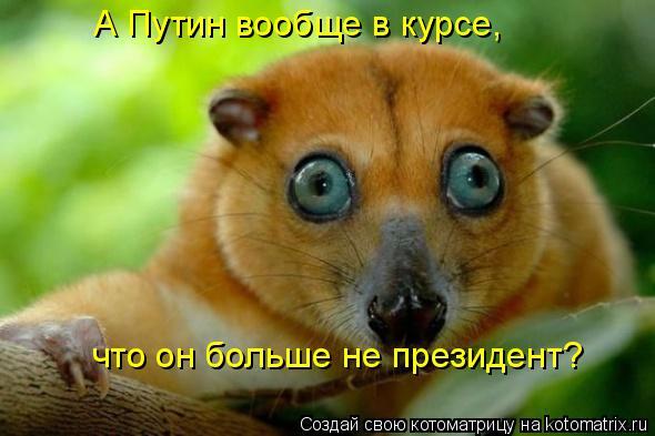 Котоматрица: А Путин вообще в курсе,  что он больше не президент?