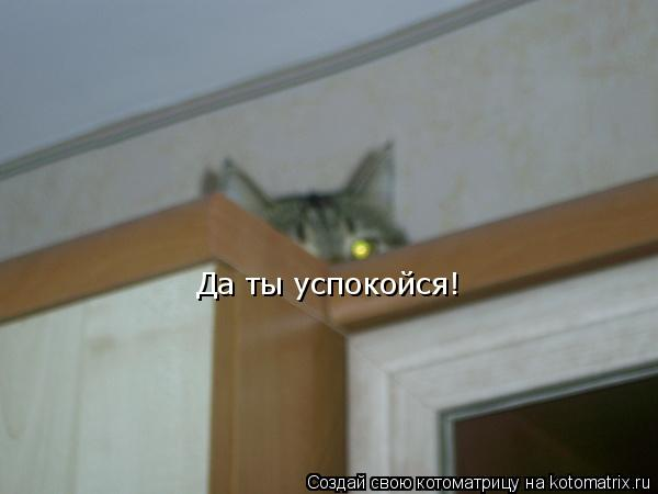 Котоматрица: Да ты успокойся!