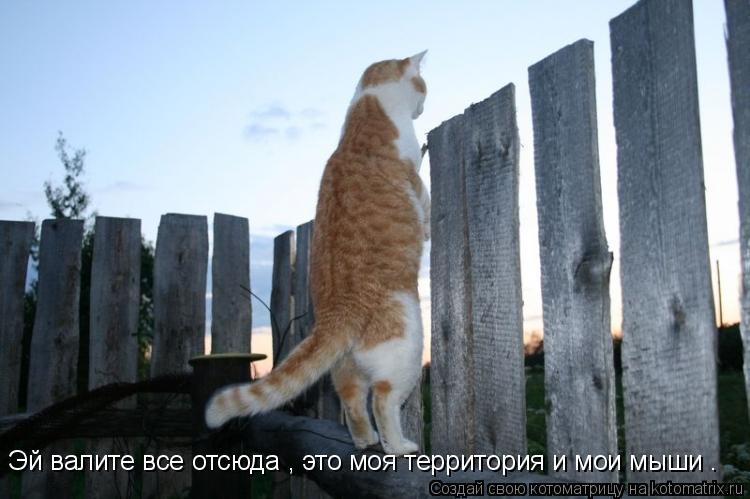 Котоматрица: Эй валите все отсюда , это моя территория и мои мыши .