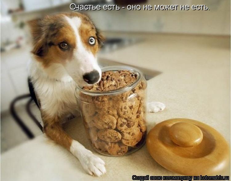 Котоматрица: Счастье есть - оно не может не есть.