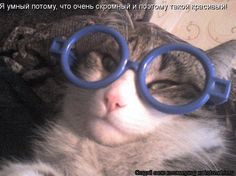 Котоматрица: Я умный потому, что очень скромный и поэтому такой красивый!