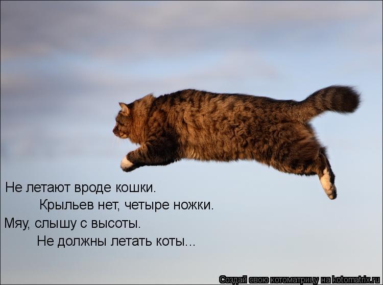 Котоматрица: Не летают вроде кошки. Крыльев нет, четыре ножки. Мяу, слышу с высоты… Не должны летать коты...
