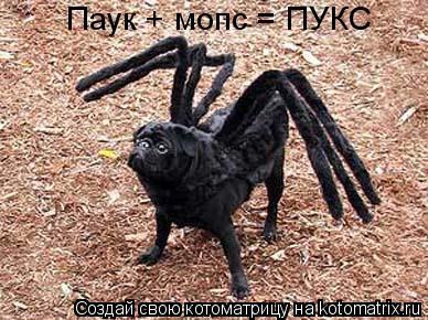 Котоматрица: Паук + мопс = ПУКС