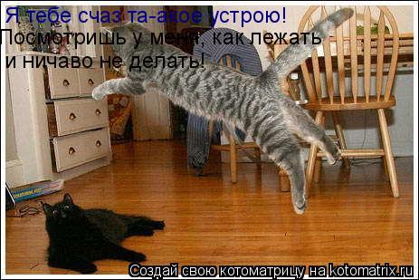 Котоматрица: Я тебе счаз та-акое устрою!  Посмотришь у меня, как лежать и ничаво не делать!