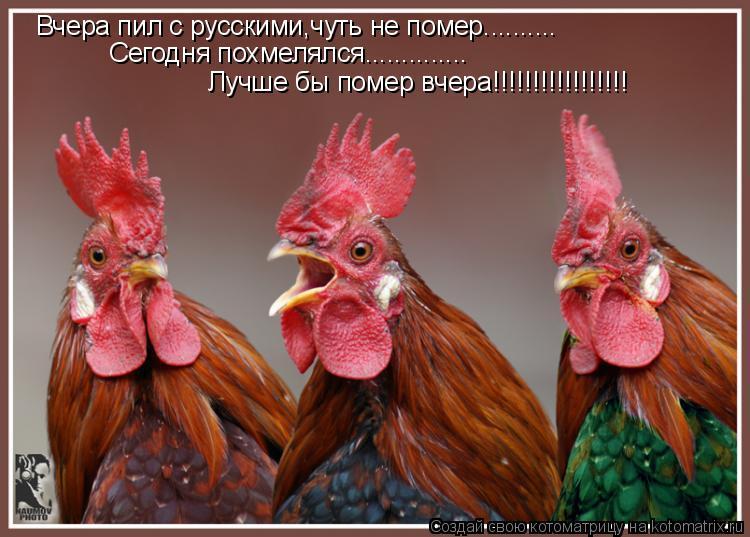 Котоматрица: Вчера пил с русскими,чуть не помер.......... Сегодня похмелялся.............. Лучше бы помер вчера!!!!!!!!!!!!!!!!!