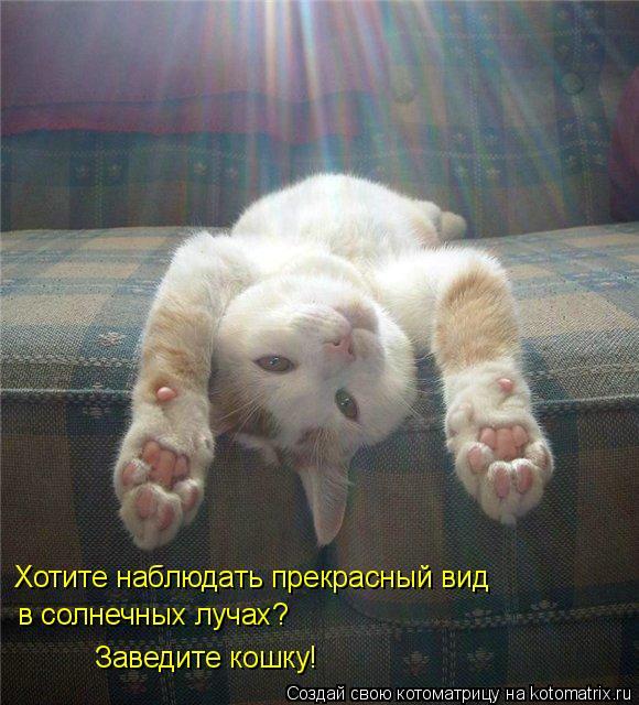 Котоматрица: Хотите наблюдать прекрасный вид   в солнечных лучах? Заведите кошку!