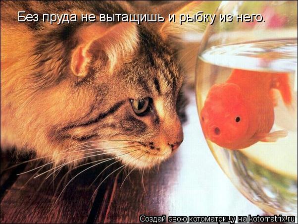 Котоматрица: Без пруда не вытащишь и рыбку из него.