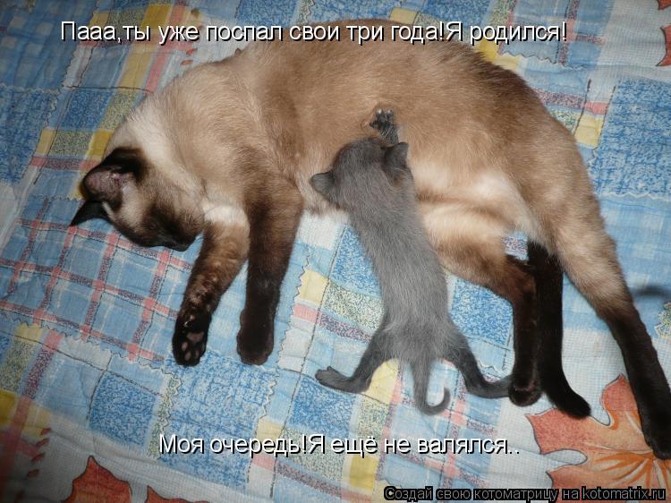 Котоматрица: Пааа,ты уже поспал свои три года!Я родился! Моя очередь!Я ещё не валялся..