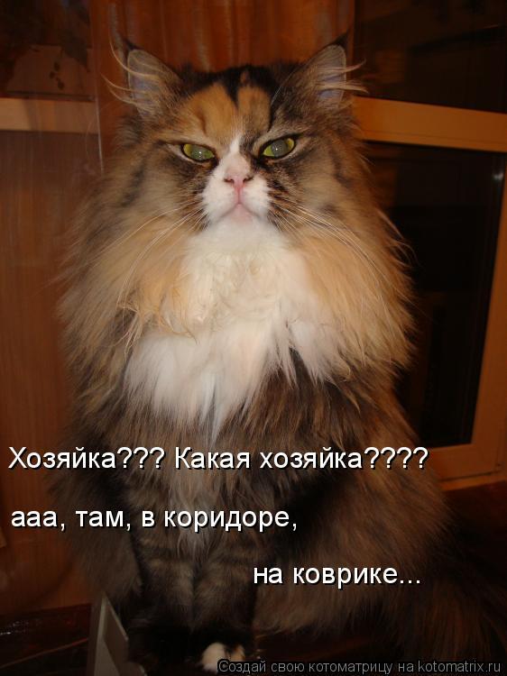 Котоматрица: Хозяйка??? Какая хозяйка???? ааа, там, в коридоре,  на коврике...