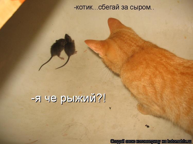Котоматрица: -котик...сбегай за сыром.. -я че рыжий?!