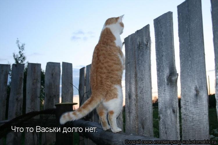 Котоматрица: Что то Васьки долго нет.