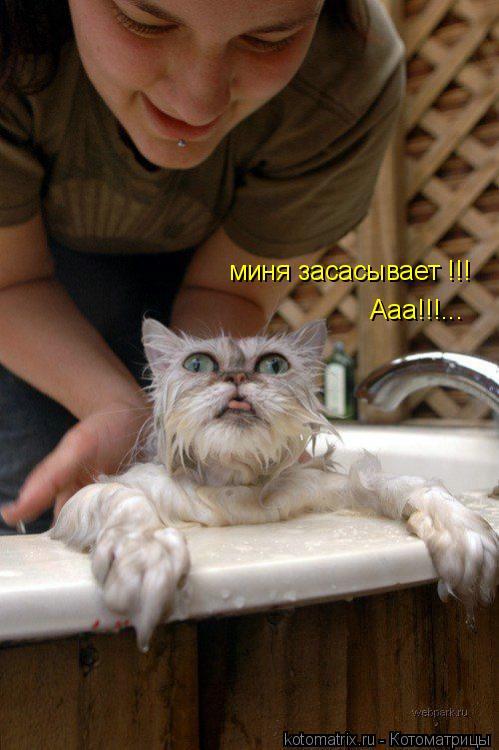 Котоматрица: миня засасывает !!! Ааа!!!...