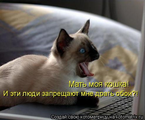 Котоматрица: Мать моя кошка! И эти люди запрещают мне драть обои?!