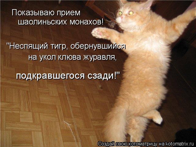 """Котоматрица: Показываю прием шаолиньских монахов! """"Неспящий тигр, обернувшийся на укол клюва журавля, подкравшегося сзади!"""""""