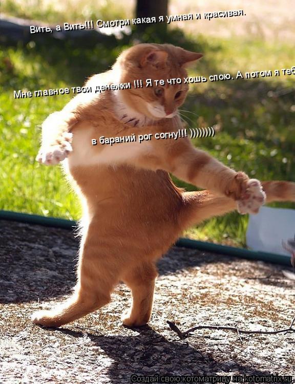 Котоматрица: Мне главное твои денежки !!! Я те что хошь спою. А потом я тебя в бараний рог согну. )))))))) [Удалить] Вить, а Вить!!! Смотри какая я умная и красива