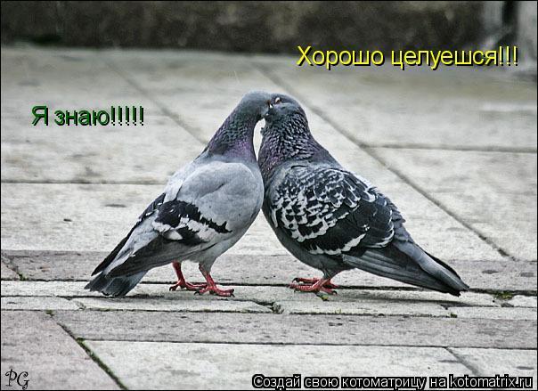 Котоматрица: Хорошо целуешся!!! Я знаю!!!!!