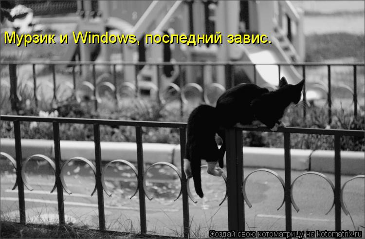 Котоматрица: Мурзик и Windows, последний завис.