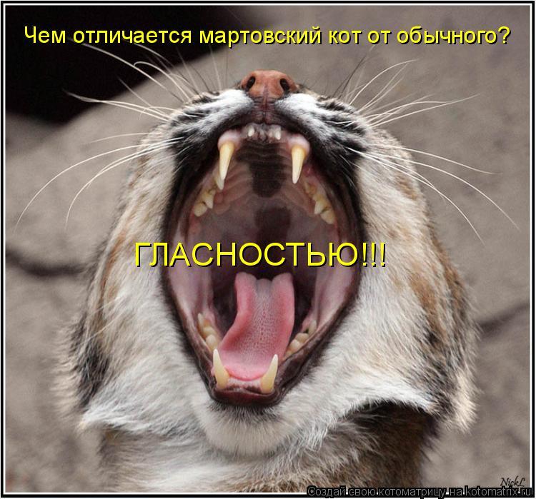 Котоматрица: Чем отличается мартовский кот от обычного? ГЛАСНОСТЬЮ!!!