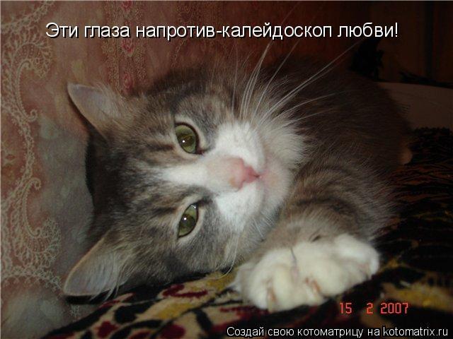 Котоматрица: Эти глаза напротив-калейдоскоп любви!