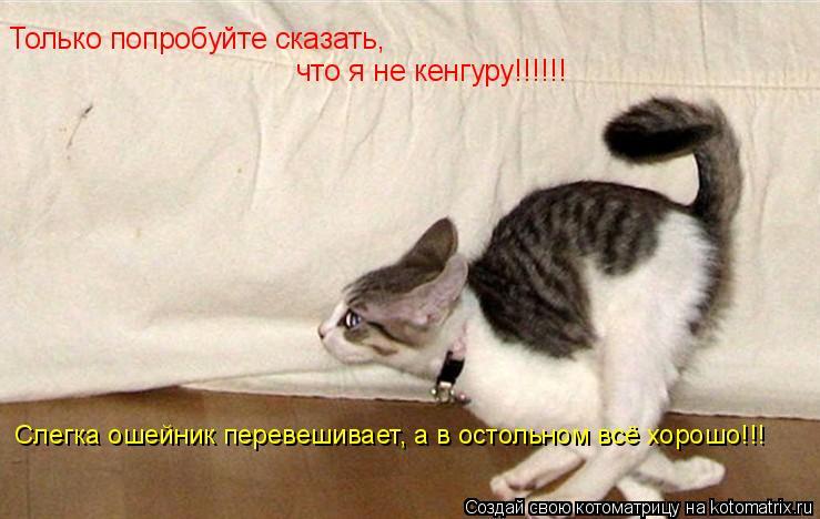 Котоматрица: Только попробуйте сказать,  что я не кенгуру!!!!!! Слегка ошейник перевешивает, а в остольном всё хорошо!!!
