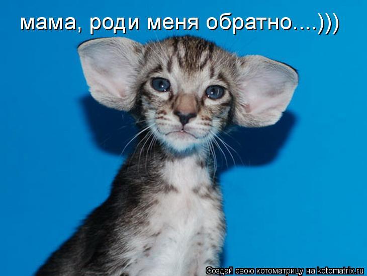 Котоматрица: мама, роди меня обратно....)))