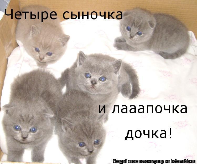 Котоматрица: Четыре сыночка и лааапочка дочка!