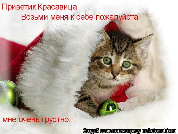 Котоматрица: Приветик Красавица Возьми меня к себе пожалуйста  мне очень грустно...