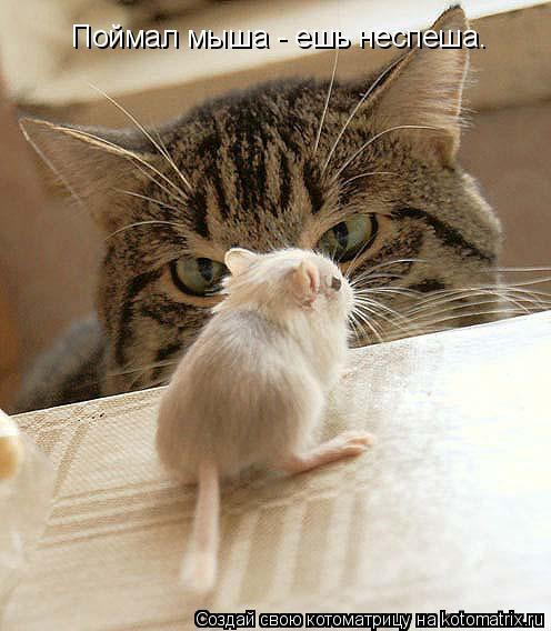 Котоматрица: Поймал мыша - ешь неспеша.