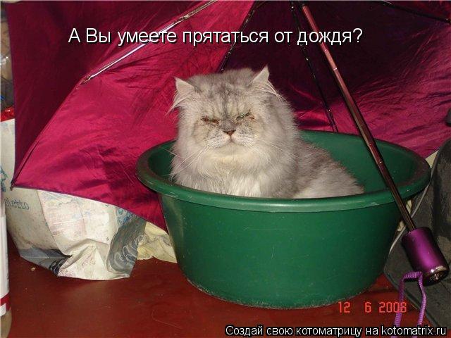 Котоматрица: А Вы умеете прятаться от дождя?