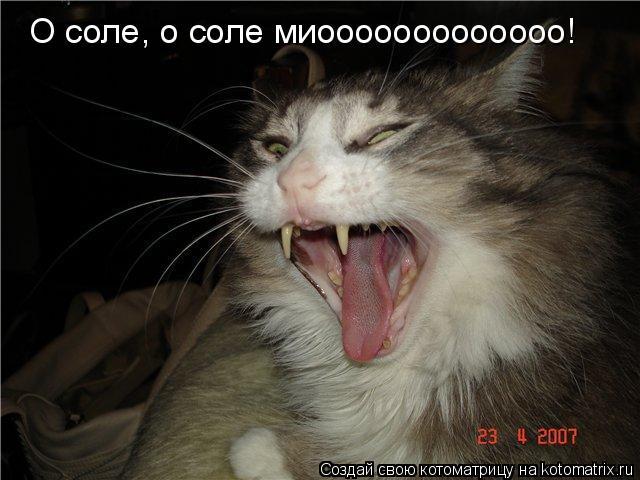 Котоматрица: О соле, о соле миооооооооооооо!