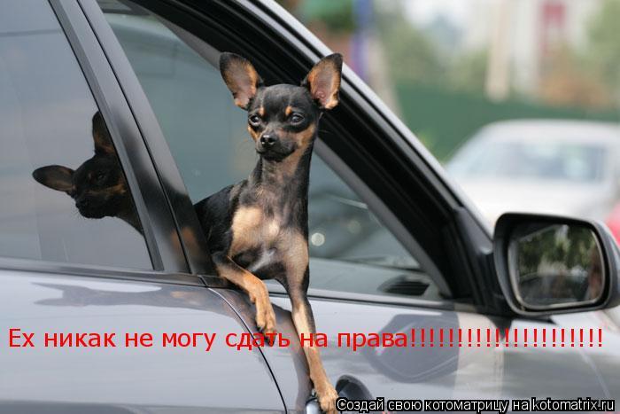 Котоматрица: Ех никак не могу сдать на права!!!!!!!!!!!!!!!!!!!!!