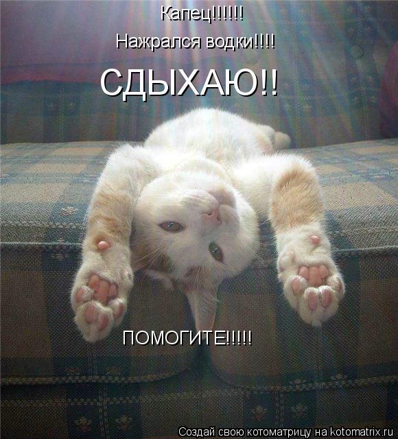 Котоматрица: Капец!!!!!! Нажрался водки!!!! СДЫХАЮ!! ПОМОГИТЕ!!!!!
