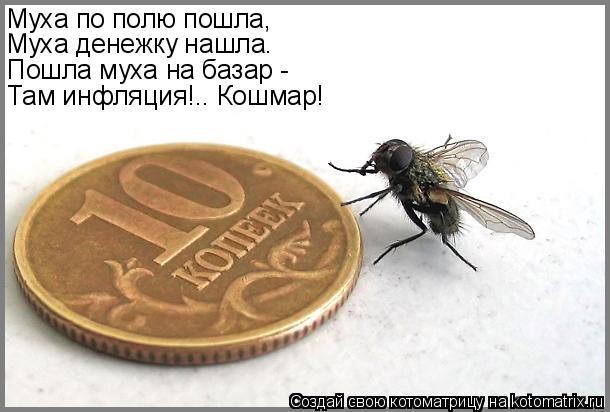 Котоматрица: Муха по полю пошла, Муха денежку нашла. Пошла муха на базар - Там инфляция!.. Кошмар!
