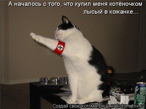 Котоматрица: А началось с того, что купил меня котёночком лысый в кожанке...