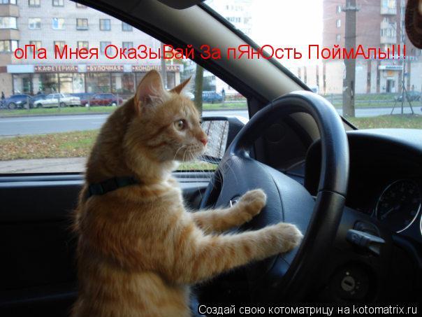 Котоматрица: оПа Мнея ОкаЗыВай За пЯнОсть ПоймАлы!!!