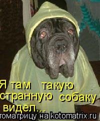 Котоматрица: Я там такую странную собаку видел...