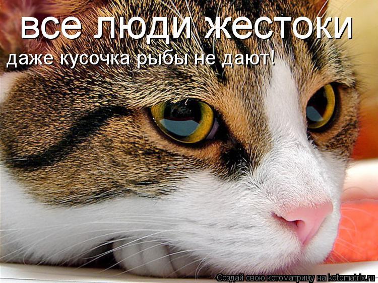 Котоматрица: все люди жестоки даже кусочка рыбы не дают!