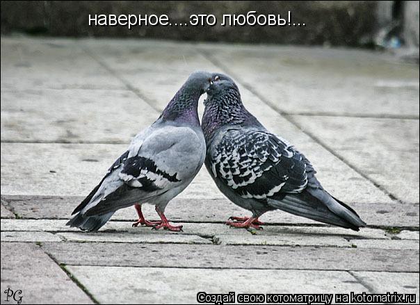 Котоматрица: наверное....это любовь!...