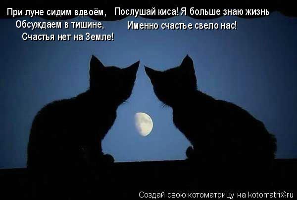 Котоматрица: При луне сидим вдвоём, Обсуждаем в тишине, Счастья нет на Земле! Послушай киса! Я больше знаю жизнь Именно счастье свело нас!