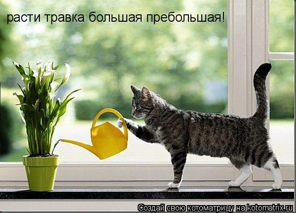 Котоматрица: расти травка большая пребольшая!