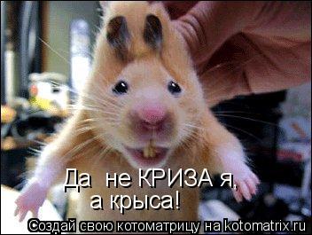 Котоматрица: Да  не КРИЗА я, а крыса!