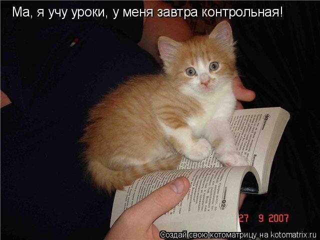 Котоматрица: Ма, я учу уроки, у меня завтра контрольная!