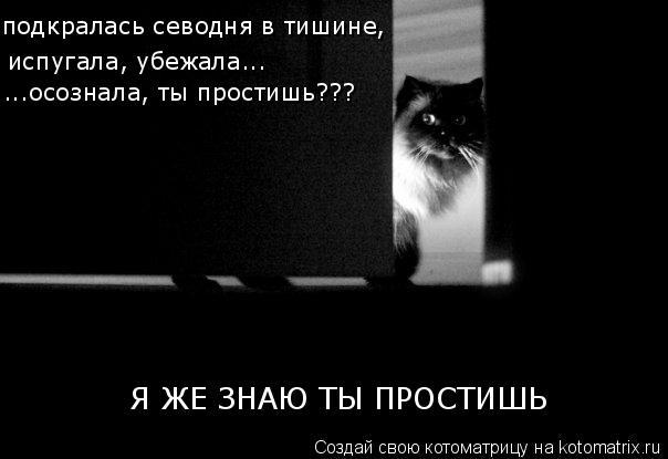 Котоматрица: подкралась севодня в тишине, испугала, убежала... ...осознала, ты простишь??? Я ЖЕ ЗНАЮ ТЫ ПРОСТИШЬ