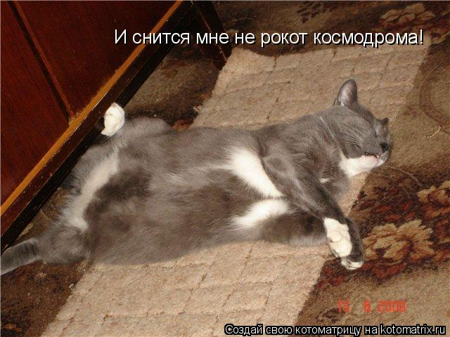 Котоматрица: И снится мне не рокот космодрома!