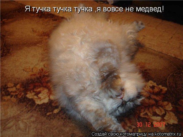 Котоматрица: Я тучка тучка тучка ,я вовсе не медвед!