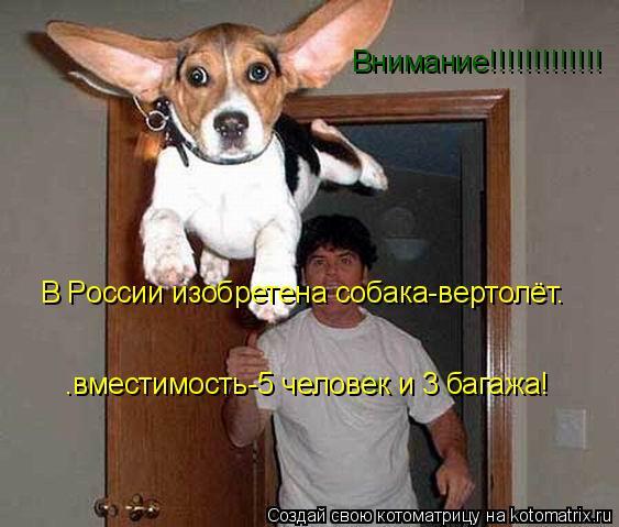 Котоматрица: Внимание!!!!!!!!!!!!! В России изобретена собака-вертолёт. .вместимость-5 человек и 3 багажа!