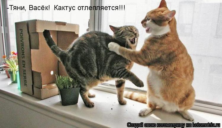 Котоматрица: -Тяни, Васёк! Кактус отлепляется!!!