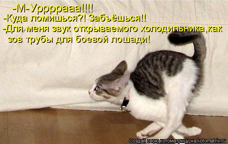 Котоматрица: -М-Уррррааа!!!! -Куда ломишься?! Забъёшься!! -Для меня звук открываемого холодильника,как зов трубы для боевой лошади!
